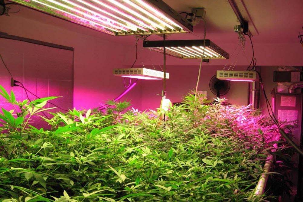 do grow lights work