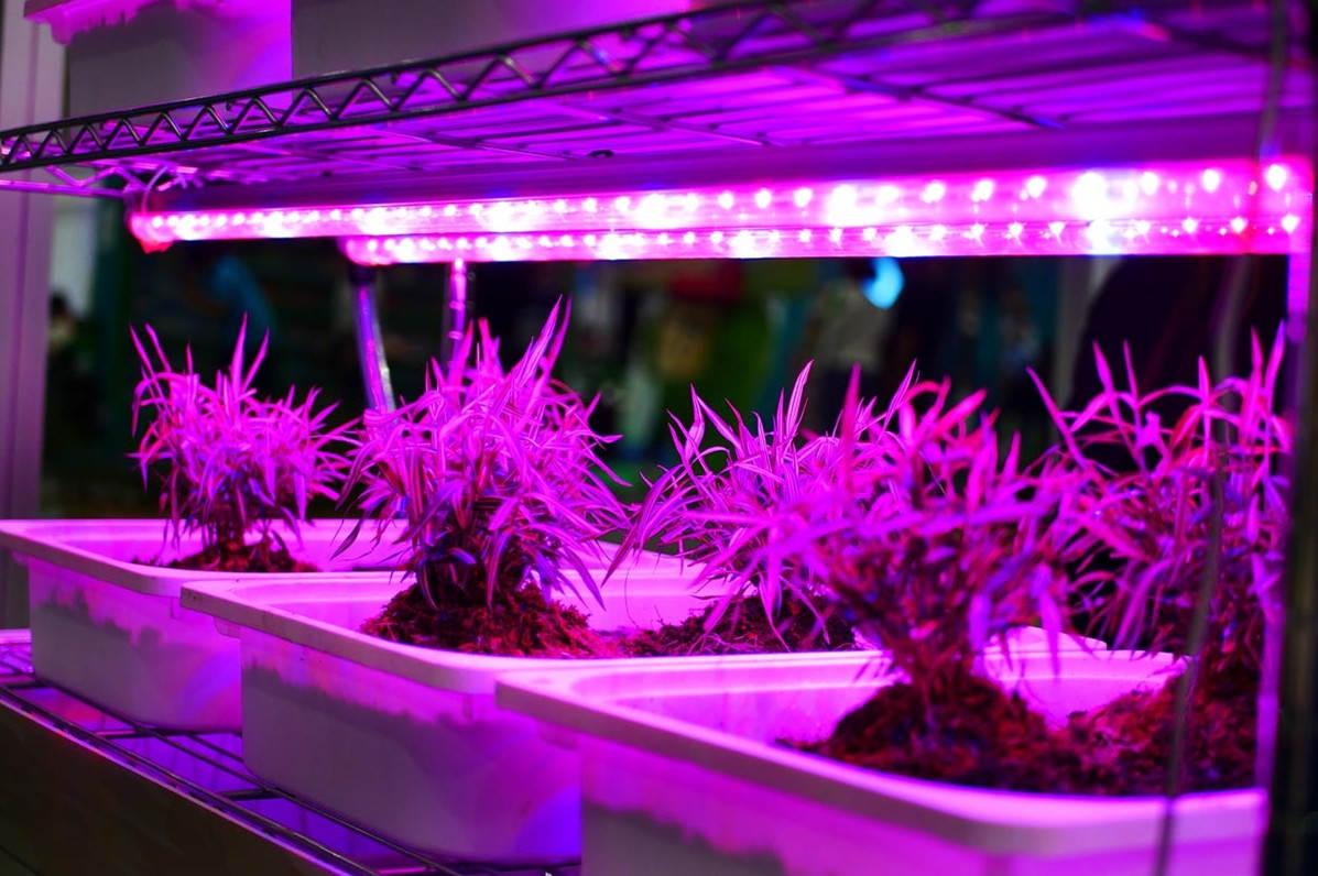 how do grow lights work
