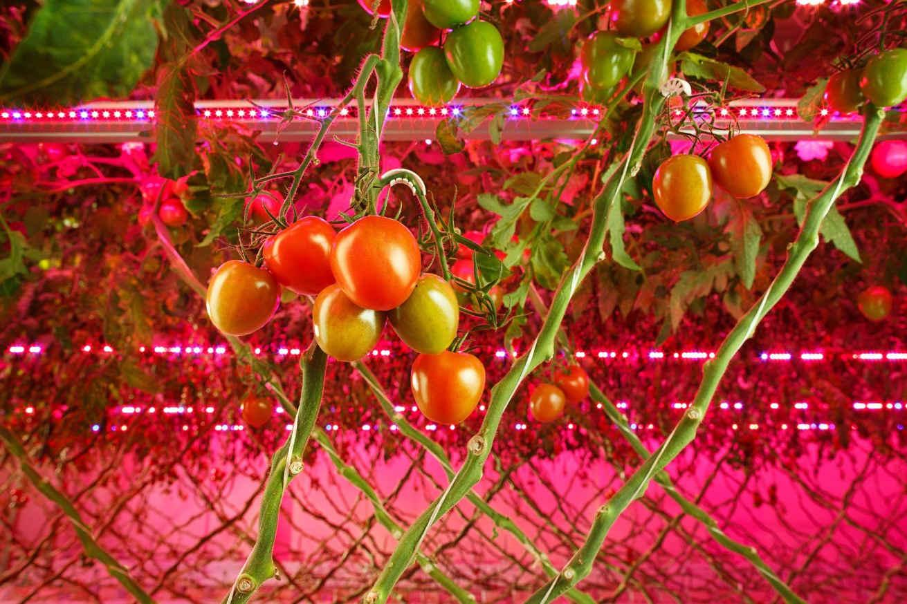 how long to keep grow lights on plants
