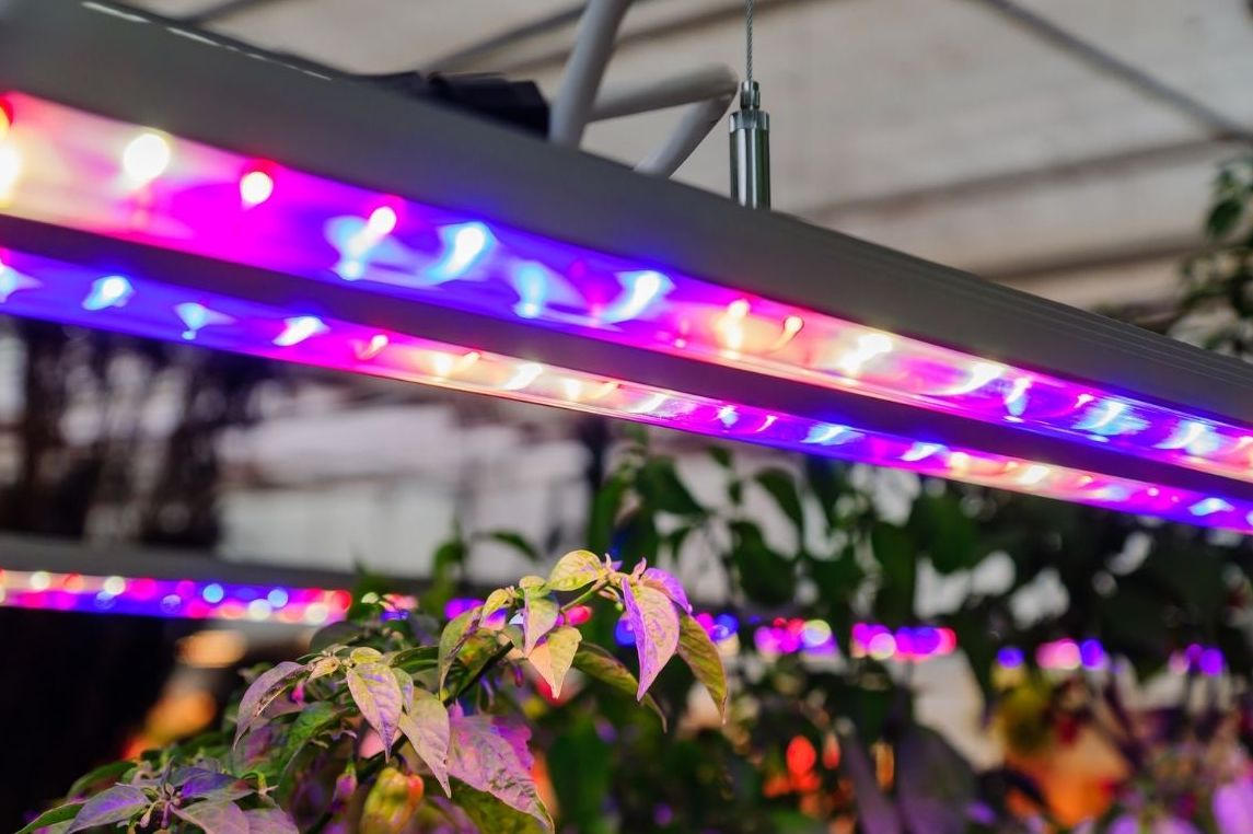 how long to leave grow light on