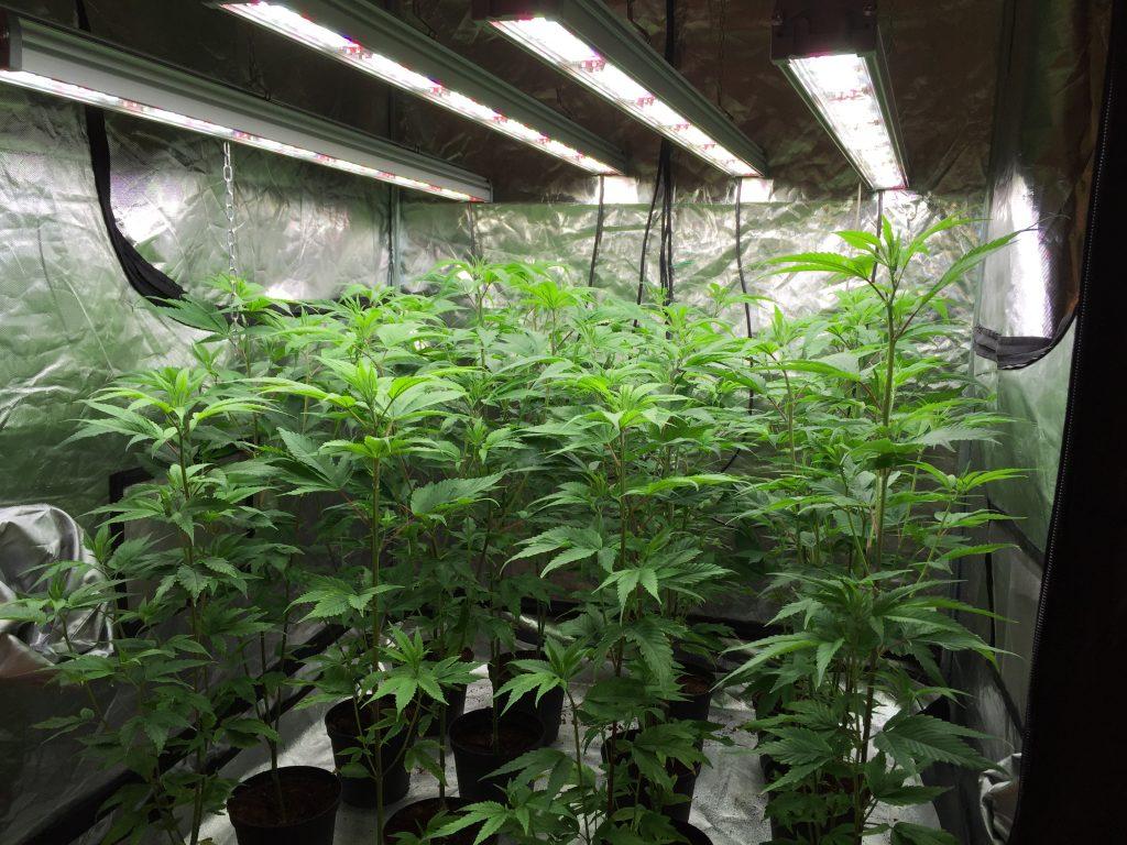 how many led watts per plant