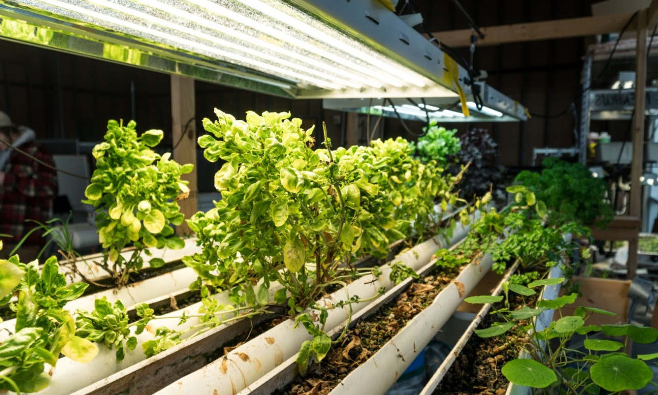 how much light do plants need to grow