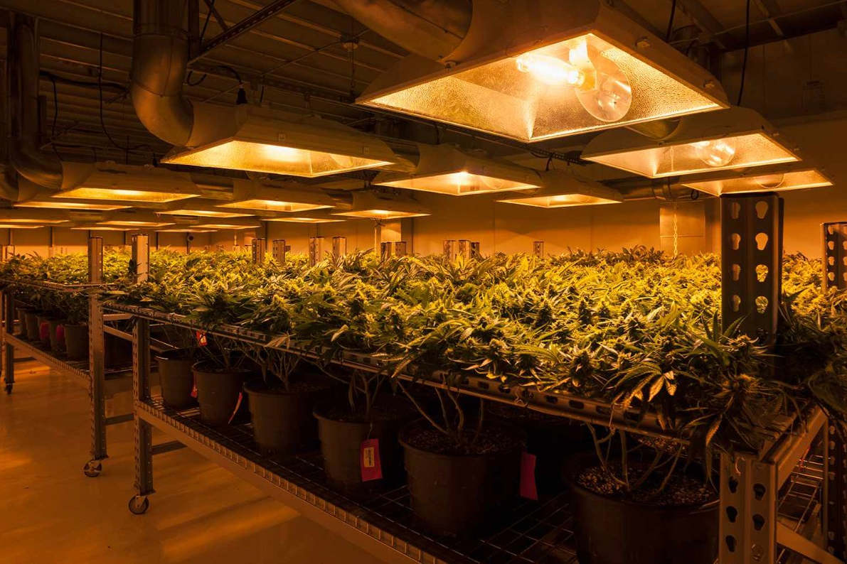 how to grow plants indoors with lights