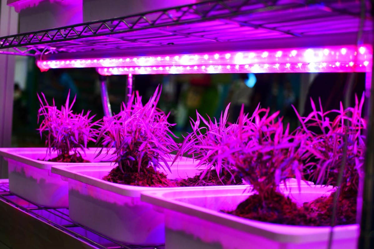 how to set up grow lights for indoor plants
