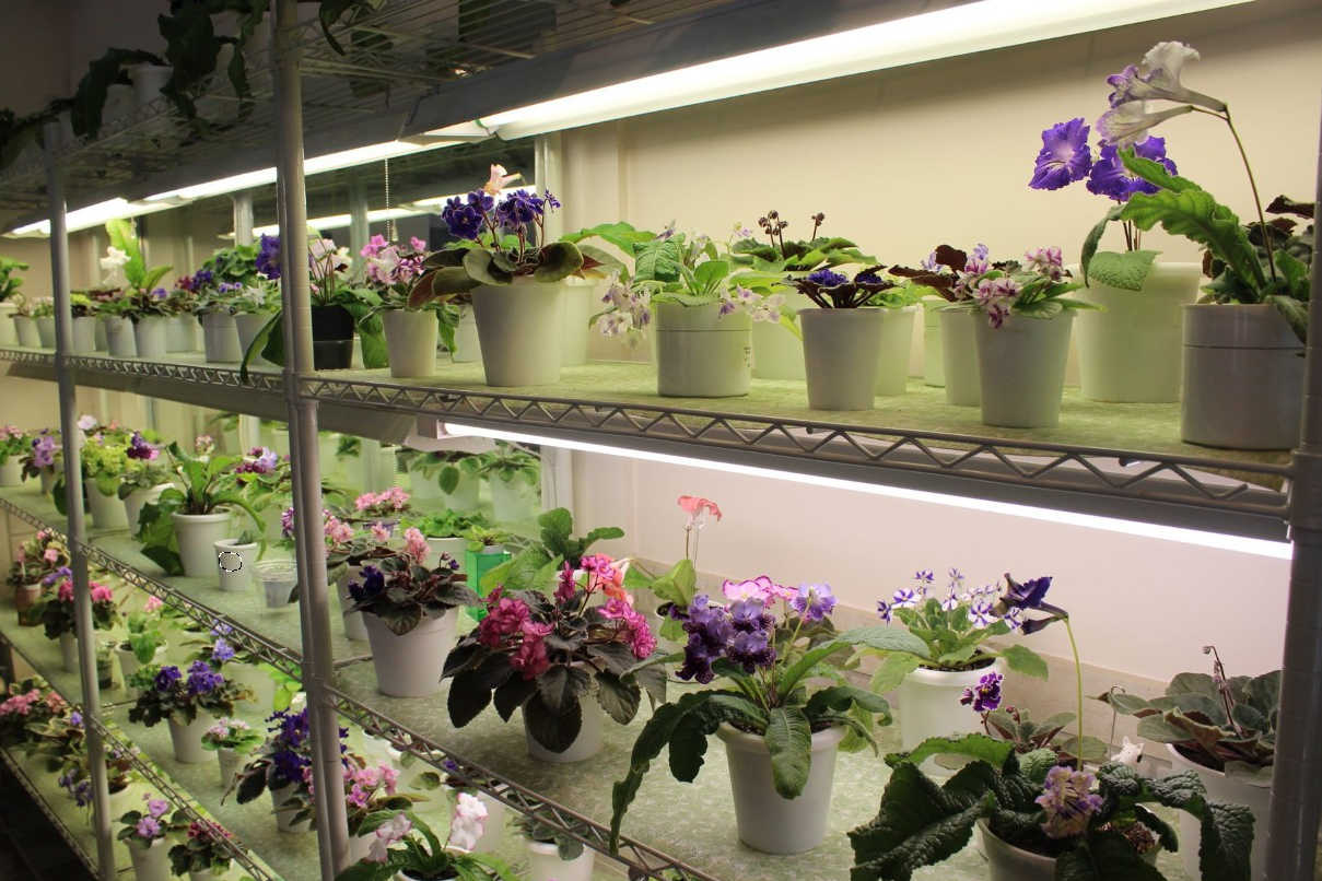 how to use grow lights for indoor plants