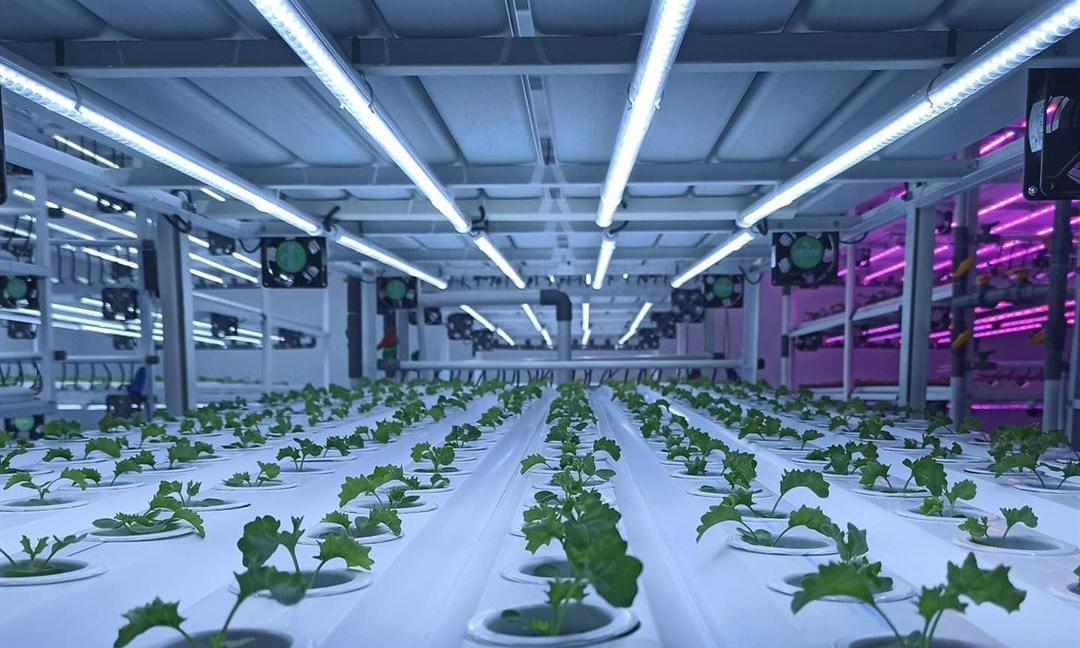 watts per square foot grow room