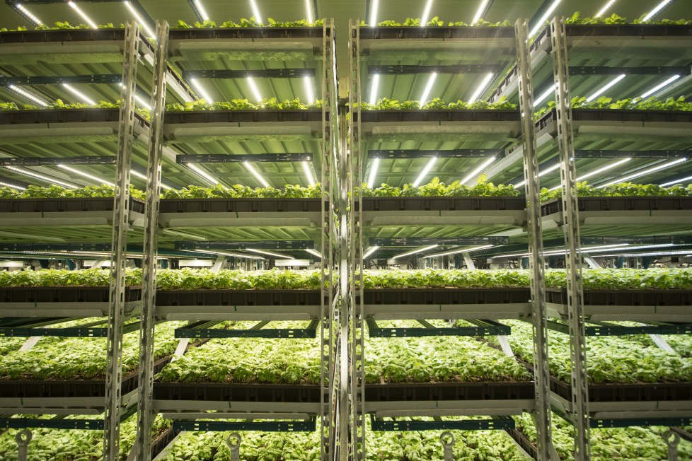what is the optimal range for watts per square footage in a grow room